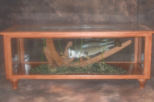Reflections Taxidermy Monett Missouri Gallery - Bass coffee table