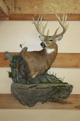 Reflections Taxidermy Monett Missouri Gallery